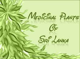 medicinal plants of sri lanka 09 30 12 medicinal plants of sri lanka