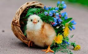 images of beautiful love birds imprea net picturesque most