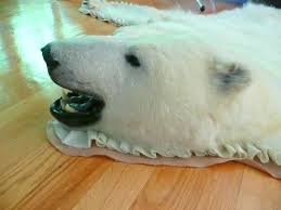 original polar bear skin rug with head 1