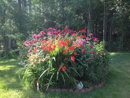 Small Picture Neoteric Ideas Hummingbird Garden Plants Manificent Design Plants