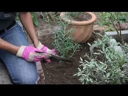 how to design a perennial herb garden