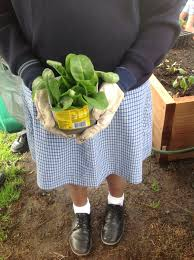 The Stephanie Alexander Kitchen Garden National Program St Peters Epping Sustainability Blog