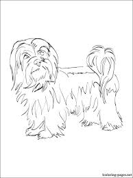 havanese animal coloring pages