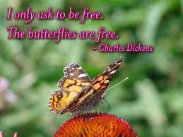 beautiful butterfly pictures with quotes. Beautiful Pictures Beautiful Butterfly Image Quotes For Butterfly Pictures With Quotes M