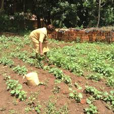 Uses Of Kitchen Garden Kitchen Gardens Are Victory Gardens In Boosting Nutrition And