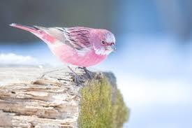 A Book of Rather Strange Animals on Twitter   Pretty birds, Weird ...
