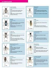 Gnat Identification Chart Chart For Identifying Types Of Common Flies Bestpestcontroluk