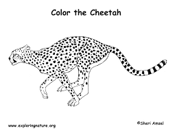 Small Picture Cheetah Coloring Page