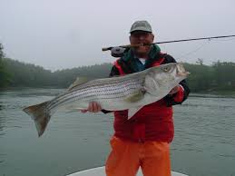 Striped bass forever maine