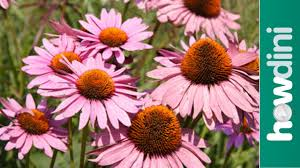 Small Picture How to plant perennials YouTube