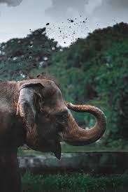 Animal Elephant HD Wallpapers ...