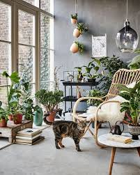 Botanic Living Room Orangery With A Rattan Chair Plants Flowers And A Cat  Fake Living Room