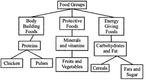 Protein Vitamins Minerals Fats And Carbohydrates Chart Jee Main Jee Advanced Cbse Neet Iit Free Study Packages