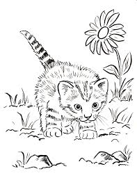 Small Picture Little Cute Kitten Coloring Pages Womanmatecom