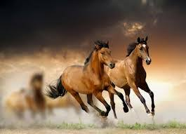 horses running in the wind. Beautiful Running Two Horses Running In The Wind  Photo6 On Horses Running In The Wind N