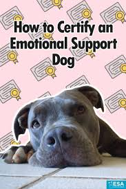 How To Get A Doctors Note For An Emotional Support Dog How To Certify An Emotional Support Dog Esa Doctors
