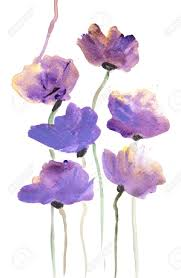 purple poppy flower on white watercolor painting in impressionism style stock photo 63257462