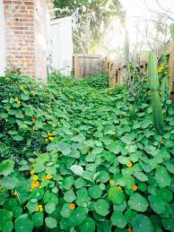 edible ground covers for vegetable gardens