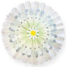 Butterbrottüten Blüten Bastelset 24 St 10x22cm Blumenwiese