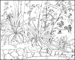 nature coloring books nature ng book pages of books to print art nature ng book dover