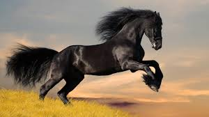 hd wallpaper widescreen animals. Interesting Widescreen HD Wallpapers Widescreen 1080P 3D  Black Running Horse Animal  1080p WideScreen Throughout Hd Wallpaper Animals T