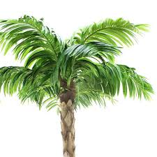 decorative palm trees artificial outdoor palm trees uk artificial palm trees