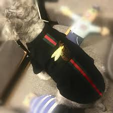 Designer Dog Clothes And Accessories Luxury Designer Dog Shirt Designer Dog Clothes And Accessories
