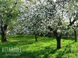 urban fruit an edible landscape is great for city gardeners consider growing fruit trees
