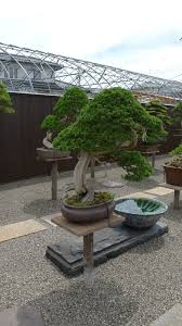 bonsai gardens. Find This Pin And More On Bonsai Gardens By Massimobandera.