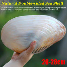 <b>Conch</b> Large reviews – Online shopping and reviews for <b>Conch</b> ...