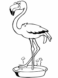 Flamingo Kleurplaat Dieren Kleurplaat Animaatjesnl