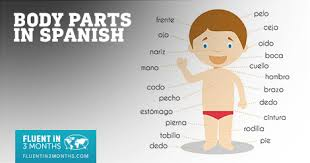 Body Part Chart For Toddlers The Ultimate Guide To Body Parts In Spanish