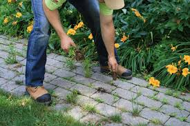 how to kill weeds in garden. how to remove weeds from your paving stones and install envirosand kill in garden