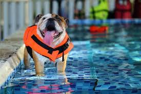 The 25 Best Dog Life Jackets Of 2019 Pet Life Today