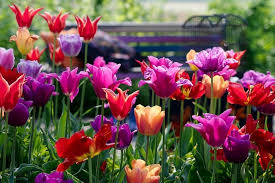 spring combination ideas bulb combinations plant combinations flowerbeds ideas spring borders