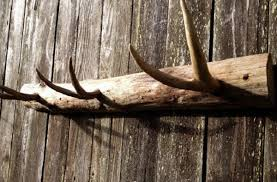 Antler Coat Racks 100 Awesome Pieces of Antler Art 15