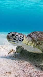 Wallpaper Turtle, underwater, sea ...