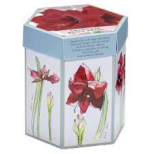van zyverden hostess gift bulbs amaryllis black pearl kit bulbs with mammoth bulb