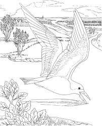Tekeningen En Kleurplaten Ijsvogel Ausmalbilder Ausmalbilder