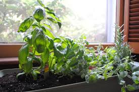 Kitchen Garden Window Small Kitchen Herb Garden How To Keep The Kitchen Herb Garden