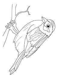 Kleurplaat Vogel Zit Op Een Stok Kleurplaatjecom