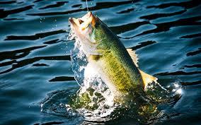 b fishing wallpaper widescreen