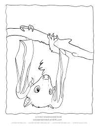 Small Picture Bat Coloring Pages Fruit Bat Pictures from our Bat Coloring Pages