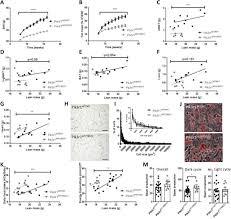 C Terminal Truncation Of Pik3r1 In Mice Models Human Lipodystrophic