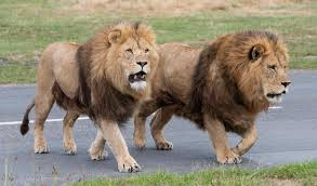 West Midland Safari and Leisure Park - Safari Park in Bewdley, West Midlands  - Meet Birmingham