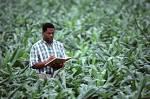 scientific agriculture