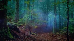 Starry Forest Cool Wallpapers