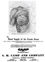 Breast Size Chart Fruit Bra Size Wikipedia