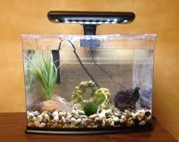Decorative Betta Fish Bowls Diy Betta Fish Tank Decorations Clublifeglobal 5
