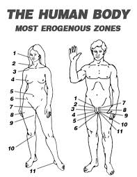 What Were The 7 Erogenous Zones Monica Teaches Chandler In